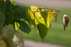 Spring, Summer, Fall (Niels A) Tags: import20160827 leaves light