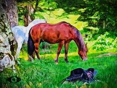 Pferde auf der Weide (andreas.gisselmann) Tags: malerei pferde gemlde zeichnung pferd schwarzwald hors horses august nature natur reiter reiten