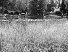 (Christian Gttner) Tags: svartvitt sverige schwarzweis schwarzweisfotografie sw summer vatten blackandwhite bw 120 645 6x45 film analog analogue agfa wasser water natur nature natura kamera krajobraz kodak400tx kodak landschaft landscapes lato landscape trd tree rollfilm zenzabronica europa etrs ecodeveloper gras grass grs see lake umwelt ufer outdoor schweden szwecja drzewo sweden czarnobiale camera baum monochrome mediumformat mittelformat moerschecodeveloper