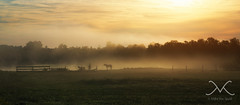 Morning Fog Horse Silhouette (Mike Ver Sprill - Milky Way Mike) Tags: morningfog horse horses silhouette pano panorama upstatenewyork ny cazenovia landscape sunrise sun dew foggy mist roadtrip travel beautiful serene fineart grass farmland mikeversprill michaelversprill