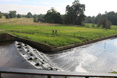 IMG_4720 (alicemaryfox) Tags: yorkshire sculpture park kaws henri moore cattle sheep art discovery water bridge stately home national