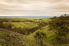 Clare Valley-3 (Rogier van de Laar) Tags: clare valley spring gully south australia landscape x100s fujifilm