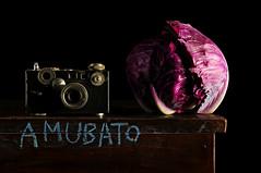 Amubato (Studio d'Xavier) Tags: amubato camera argusc2 brick cabbage purple stilllife strobist