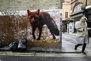 Fox on the Corner