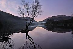 I would have....... (PentlandPirate of the North) Tags: mist lake mountains reflection tree water llanberis snowdonia gwynedd northwales dolbadarncastle llynpadarn