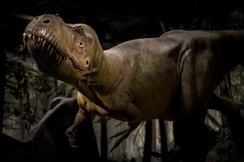 Albertosaurus on the Run
