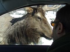 Parc Omega (Clarissa Peterson) Tags: deer parcomega