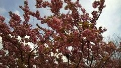 Primavera in cammino