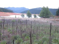 Trinity Lake (Different Apple) Tags: trinity drought trinitylake