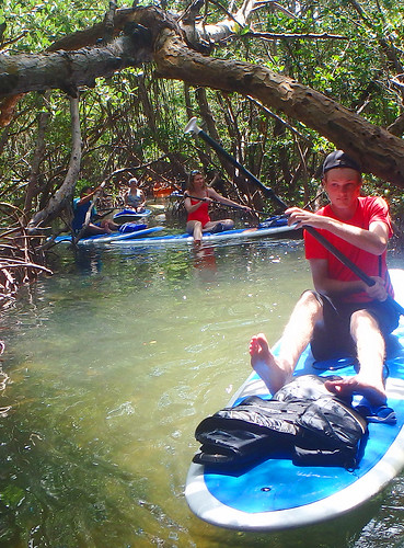 Ducking under a mangrove branch on a Paddleboard Tour Sarasota