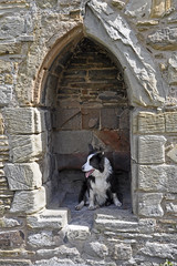 Photo of Medieval Dog Kennel?
