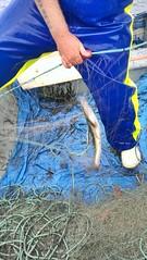 Daniel McDermott sorting some bait. #Stormline #stormlinegear #fishing #bait