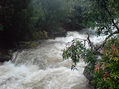 DSC03551 (Gokul Chakrapani) Tags: waterfalls karnataka westernghats bolle charmadi