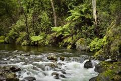 Kiewa River (phunnyfotos) Tags: phunnyfotos australia victoria vic northeastvictoria river rapids bush forest fern ferns nikon d750 nikond750 water kiewariver kiewavalley alpine highcountry flowing rocks rocky bogong green landscape