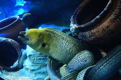 SEA Aquarium Sentosa Singapore (Howard_Lim) Tags: acquarium