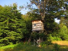 Къщичка на дървото / Tree house
