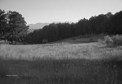Meadow and Distant Mountains (I)/Prado y Lejanas Montaas (I) (Modesto Vega) Tags: meadow prado pineforest forest pinar grass pollen sun sunray gredos nikon nikond600 fullframe