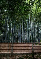 Bamboos in in koto-in zen buddhist temple in daitoku-ji, Kansai region, Kyoto, Japan (Eric Lafforgue) Tags: travel trees heritage tourism japan vertical gardens architecture night garden outdoors photography tokyo scenery kyoto asia day exterior traditional culture nobody nopeople architectural zen daytime idyllic preservation traditionalculture tranquillity tranquilscene landscaped daitokuji culturalproperty nonurbanscene touristdestination 0people traveldestination colourimage kansairegion colourpicture traditionallyjapanese japan161579