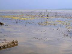 The other face of Balaton (andraszambo) Tags: balaton plattensee keszthely lake lacul see tó strand beach water hungary biggest beyondthebeach strandontúl colours