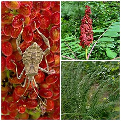A Walk in the Park (genesee_metcalfs) Tags: collage summer michigan august sumac nature grass