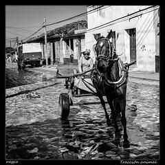 Traccin animal (meggiecaminos) Tags: street boy bw horse white black blanco car caballo calle strada negro cuba streetphotography bn trinidad carro carrozza nio cavallo bianco nero urbanlandscape bambino fotografaurbana