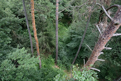 Kilátás fentről (rdwr) Tags: baumwipfelweg althodis