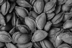 Apricot Stone (Dr. Harout) Tags: longexposure blackandwhite bw food macro nature monochrome stone fruit noiretblanc sony shell seed seeds armenia apricot medicine tamron manfrotto 322rc2  apricotstone prunusarmeniaca mordus  055cxpro3  skancheli   tamronsp9028diusd  ilce7rm2