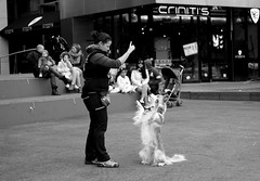 Attentive (koaysusan) Tags: candidmoment dogmaster streetphoto dog blackwhite monochrome bw streetphotography people blackandwhite