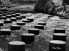 les plots dans la rivire - the pads in the river (png nexus) Tags: bw white black river noir rivire nb blanc
