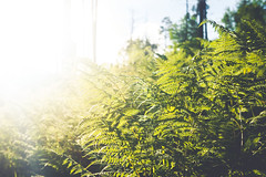 Overgrown (b. ellabarger) Tags: arizona plants sunlight mountain plant southwest fern green nature beautiful beauty forest vivid beautifullight sunny highlights hike serenity greenery serene ferns enchanted overgrowth lemmon enchantedforest greenscape thelight vividcolors tucsonarizona americansouthwest mountlemmon beautifulearth tucscon blownouthighlights beautyinnature beautyallaroundme goexplore