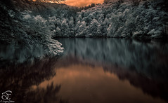 Wonderland (BeNowMeHere) Tags: ifttt 500px trip benowmehere bolu colour colours lake landscape nature trees turkey wonderland yedigller color colors spring travel infrared