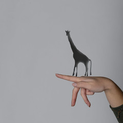 Montage avec l'ombre d'une girafe (Brnys) Tags: girafe montagephoto photoshop formationphoto