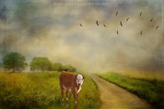 Friends in the meadow (DeniseDewirePhotography) Tags: texture birds cow digitalart pathway artisticedit 2lilowlstexture jaijohnsontexture kerstenfranktexture