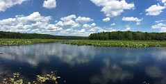 Reflections (Sarah Zappe) Tags: statepark ripples lilypads pano iphone landscape clouds pennsylvania reflection lake blackmoshannon