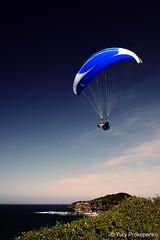 Paraglider (renatonovi1) Tags: paraglider beach monavale sydney australia