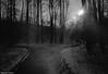where the path forks (McMac70) Tags: badvilbel blackandwhite film film135 kodakbw400cn nikonl35af2 schwarzweis