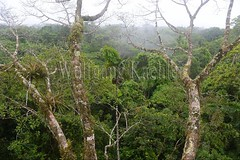 60071607 (wolfgangkaehler) Tags: 2016 southamerica southamerican ecuador ecuadorian latinamerica latinamerican rionapo rionapoecuador rionaporiver rainforest coca cocaecuador laselvalodge observationtower tower rainforestcanopy epiphyticplants epiphyte epiphytes trees
