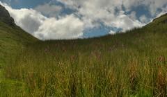 digitalis (BoblyP) Tags: boblyp lakedistrict northwestengland cumbria mountains mountainview digitalis foxglove sky clouds coniston oldmanofconiston lakeconiston