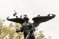 Birds and Angel, Central Park, NYC DSC02329 (nianci pan) Tags: nyc newyork newyorkcity manhattan nature cityscape city urban park garden centralpark spring sony sonyalphadslr sonyphotographing nianci pan angel birds