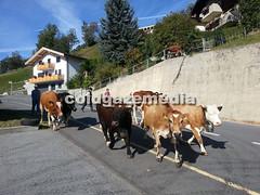 20150927_104007 (coldgazemedia) Tags: photobank stockphoto scenery schweiz switzerland swissvillage swissalps landscape naters brig birgish mund alps mountain swisshuts alpine alpinehut bluesky blue cow cattle herding animal