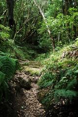 De ensueo. (lauraabreualonso) Tags: sendero trekking photo bosque laurisilva anaga beautiful tenerife islascanarias espaa