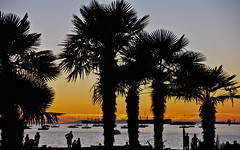 Palm Trees, Sunset Beach (kristinkarmella) Tags: vancity tree beach sunset palmtree vancouver water sillouette boat