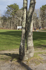 Diving in, Head First (brucetopher) Tags: park trees tree scenery legs capecod massachusetts dive diving scene 7d brewster ballpark treepeople baseballpark canon7d brucetopher treesthatlooklikepeople