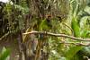 Green tones [Bali, Indonesia] (Melvinia_) Tags: park travel bali tree green bird nature colors canon indonesia 50mm bokeh parrot vert arbre oiseau papagei balibirdpark perroquet indonésie canoneos450d digitalrebelxsi