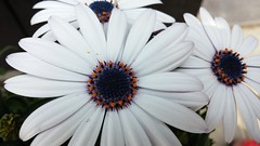 헤이리 (LeeWonHee) Tags: 꽃 헤이리 이름모름