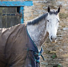 Yearsley stable (alh1) Tags: portrait horse stable northyorkshire yearsley