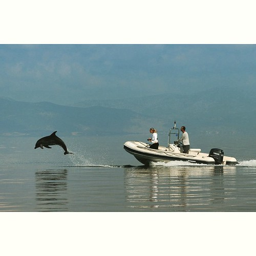 Dolphin in the #Ionian costal waters #internationaldolhpinproject #dolphin #greekislands #greece #boats #sea #summer