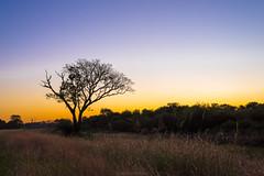 Atardecer en el camino (Carlos E Corts Parra) Tags: sunset tree landscape arbol atardecer 50mm niko