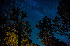 The night sky (michaelraleigh) Tags: trees minnesota night canon dark stars outdoors serene secluded milkyway infocus highquality albertlea 2035mm f28l