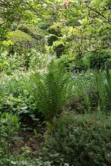 ckuchem-2715 (christine_kuchem) Tags: biogarten farn frhjahrsbler frhling garten hochbeet mai maiglckchen mauer naturgarten privatgarten trockenmauer wildwuchs naturnah natrlich
